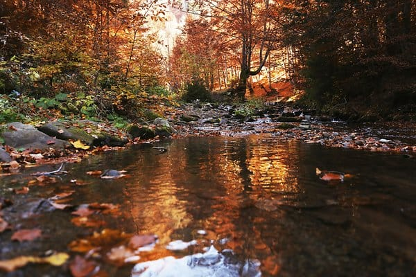 Herbst Natur Bach Symbol GettyImages-1135279352